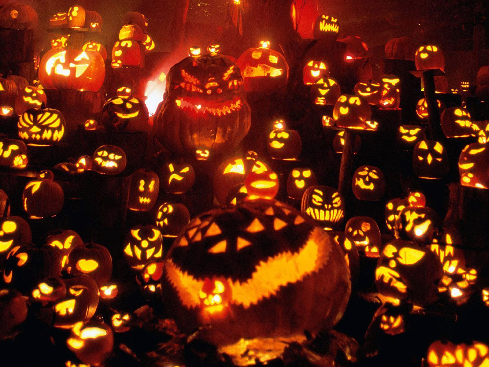 Image Detail For Pumpkins To Halloween Desktop Wallpapers Free On Latoro Com Jack O Lantern Halloween Pumpkins Diy Halloween Decorations
