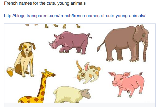 French Names For Young Animals With