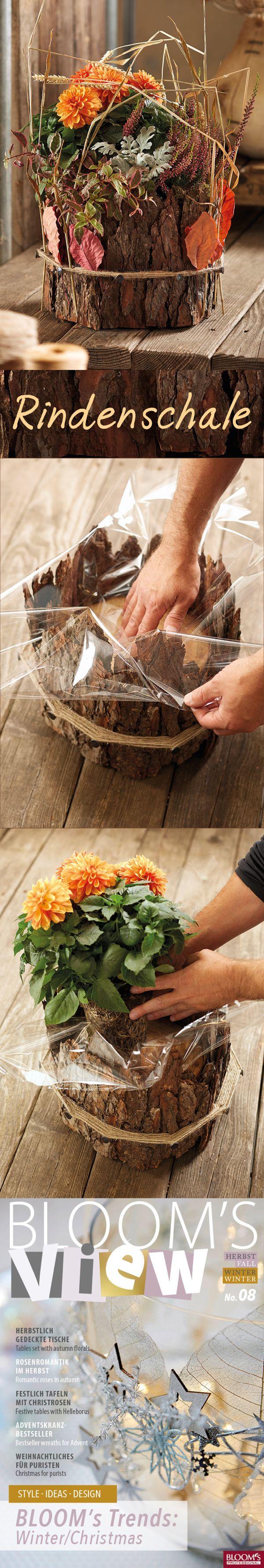 Braune Rinde von Kiefer & Co sieht hübsch und rustikal aus. Besonders dann, wenn man sie mit frischen herbstlichen Floralien kombiniert, #allerheiligengrabschmuck