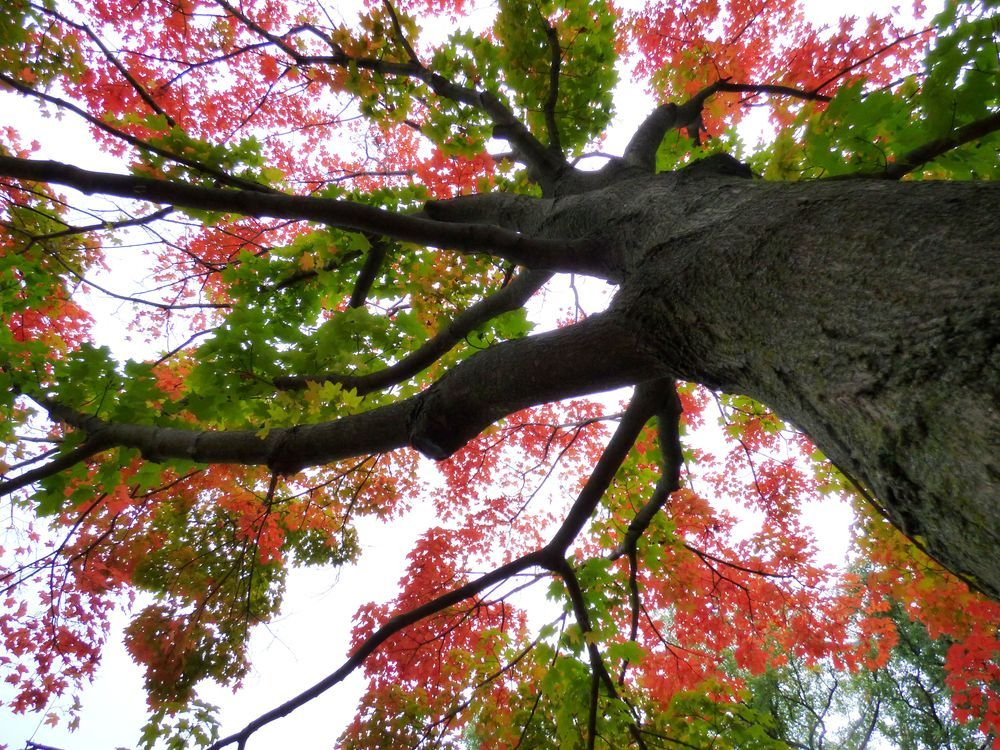 Colored Tree Photo by Saba Khozoui -- National Geographic Your Shot