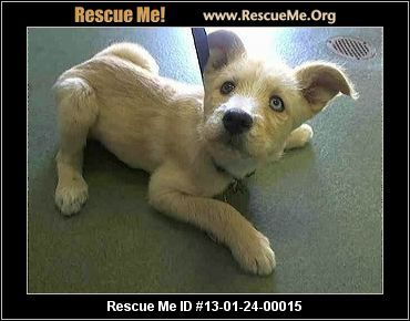 Hurry Please Is In High Kill Sheler Devore Help Puppy Bessie