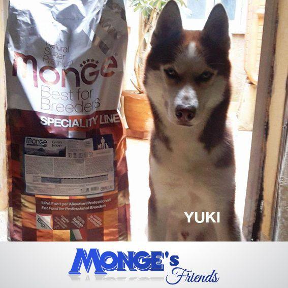 Yuki #Mongesfriends