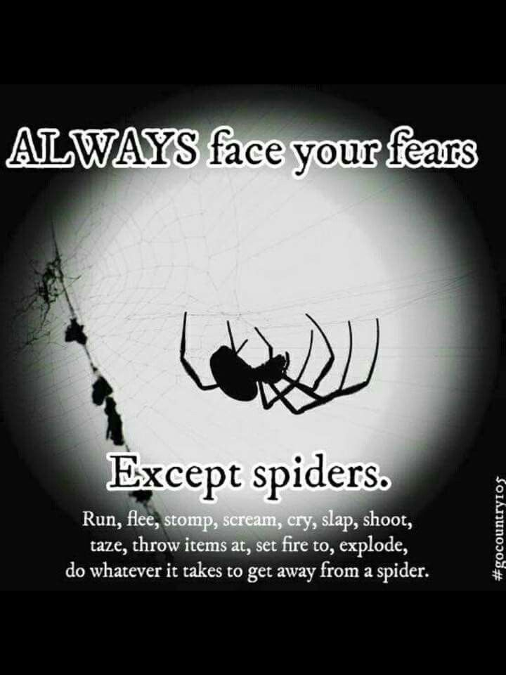 Spider Quotes Pin by Vicki Shows on LOL   Funny, Lol, Humor Spider Quotes