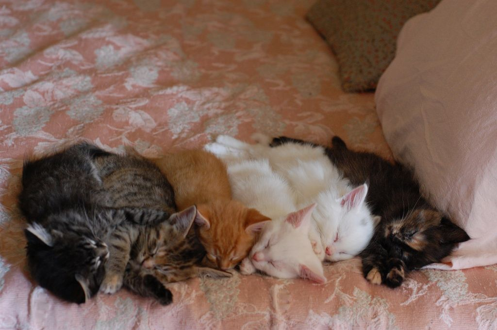 read all about them on the Itty Bitty Kitty Committee.  see profile for blog address.
