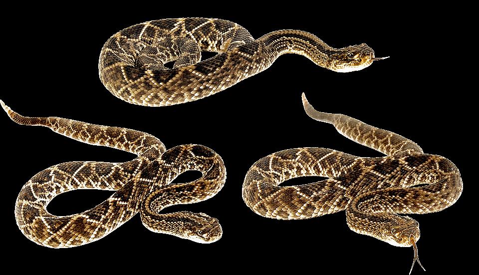 Snake Transparent PNG Image Free_7 GetintoPik in 2020