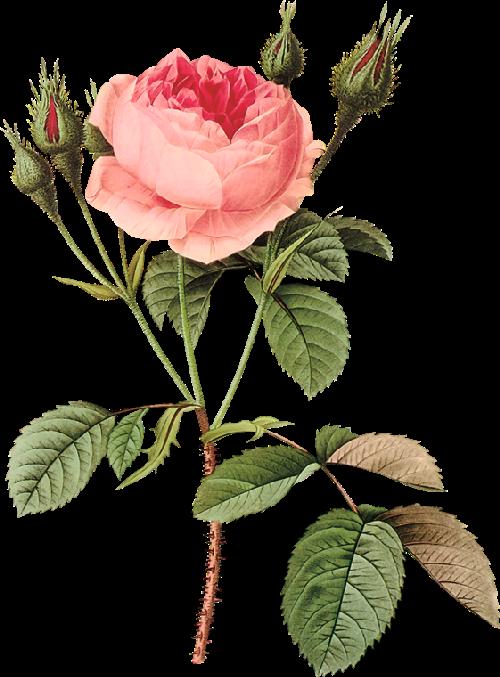 Flores Seni Bunga Ilustrasi Bunga Gambar Bunga