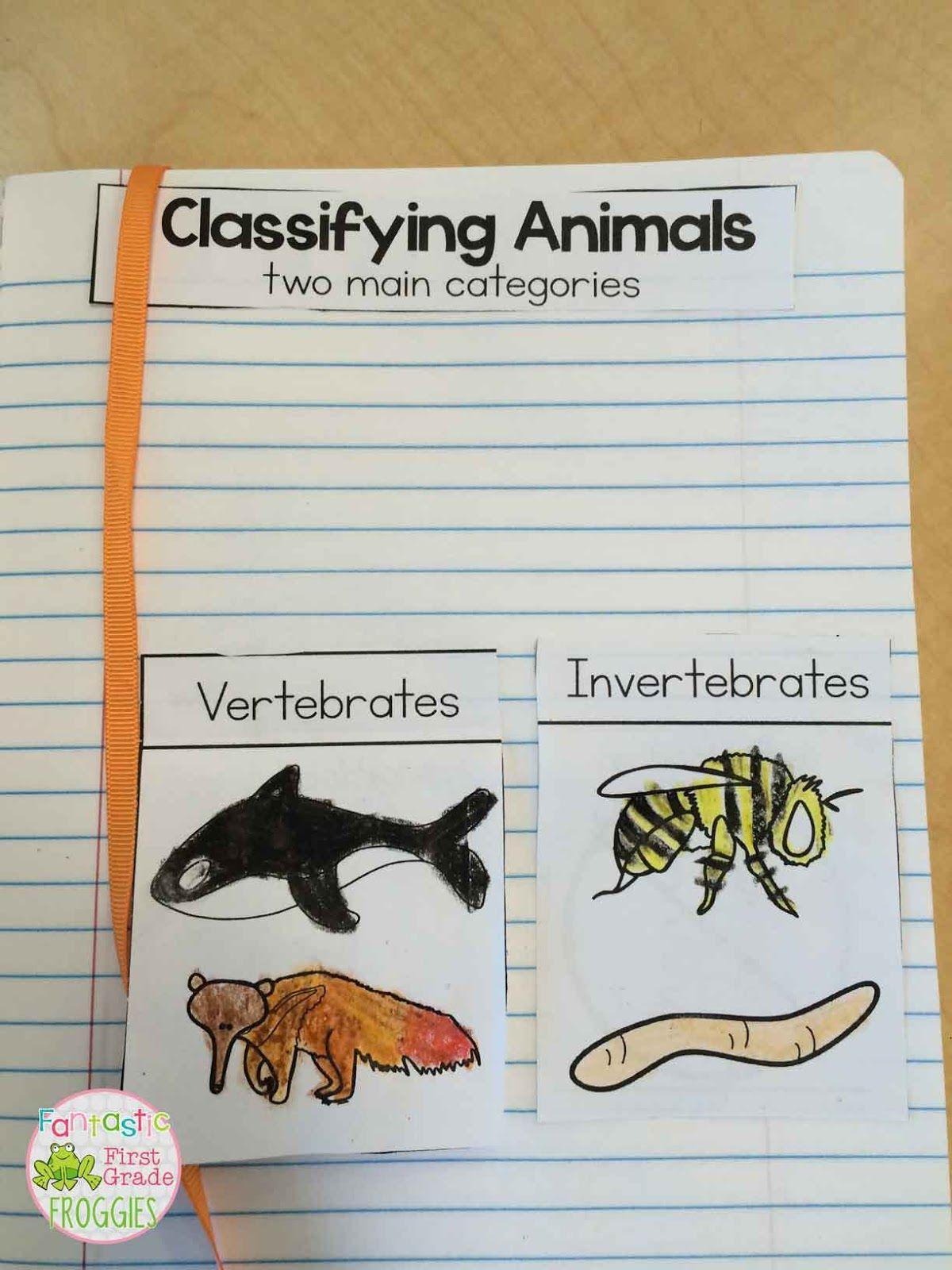 Vertebrates Vs Invertebrates 1 200 1 600 Pixels