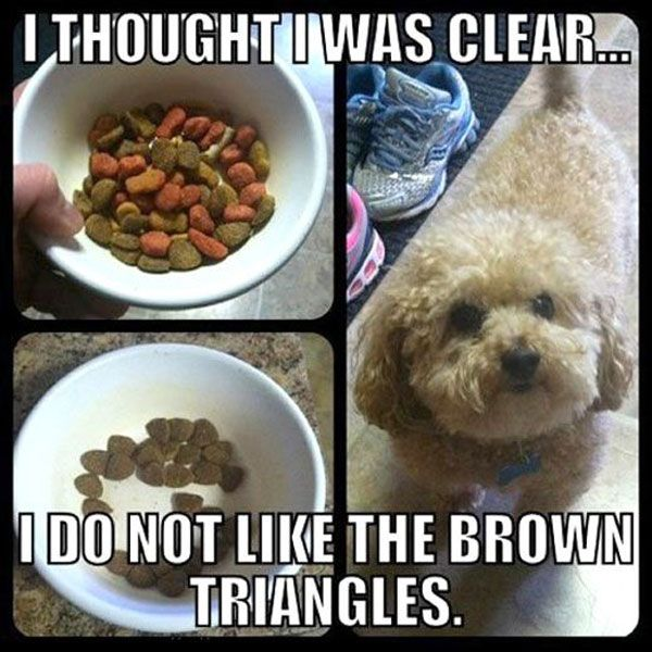 Funny Pictures Of Animals   Fun Claw: Funny Pictures Of Dogs - 20 Pics