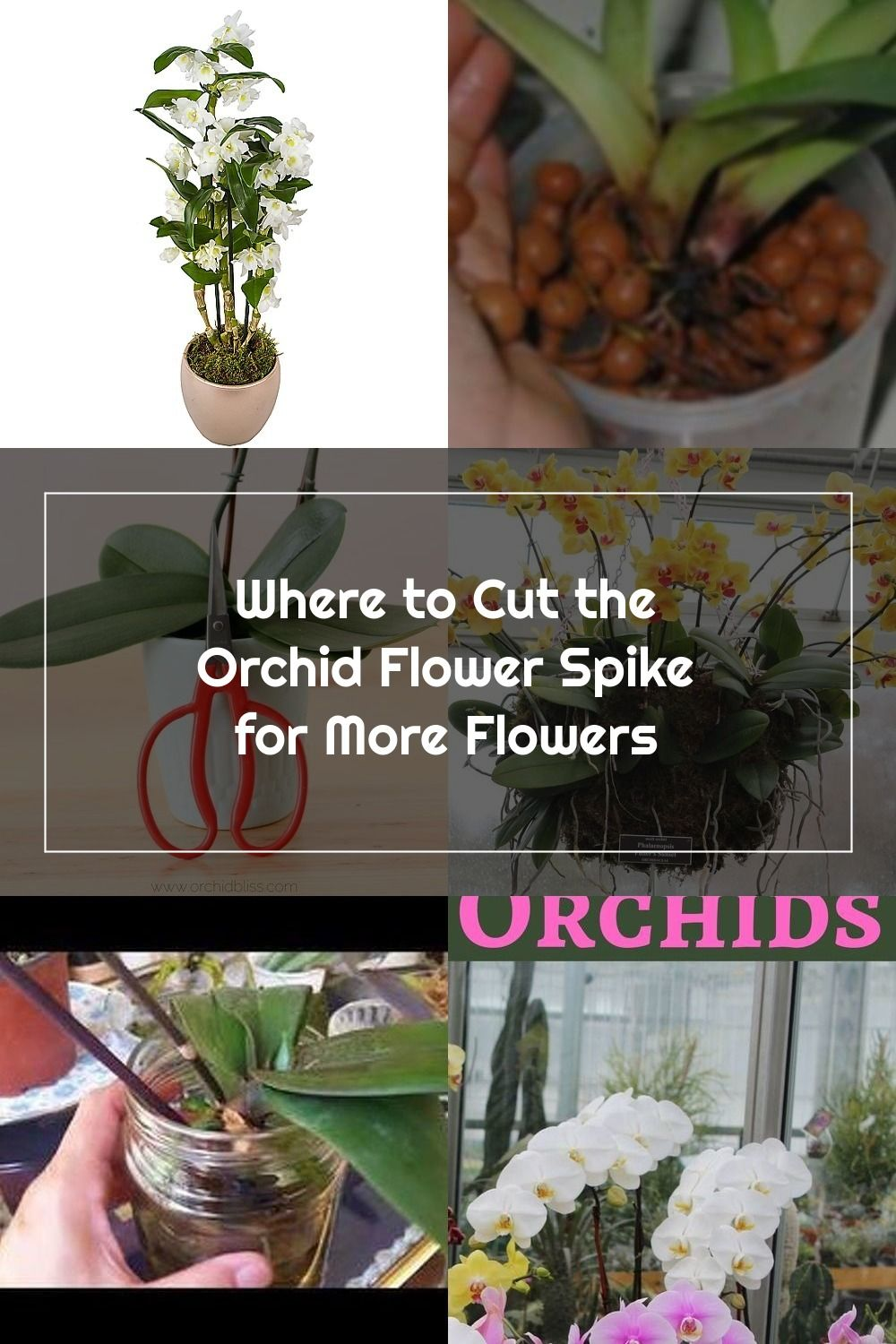 You Ve Enjoyed Your Orchid For Several Months And Now The Flowers Are Wilting And Dropping It Is Time To Trim The Orchid St In 2020 Orchid Flower Orchids Orchid Care