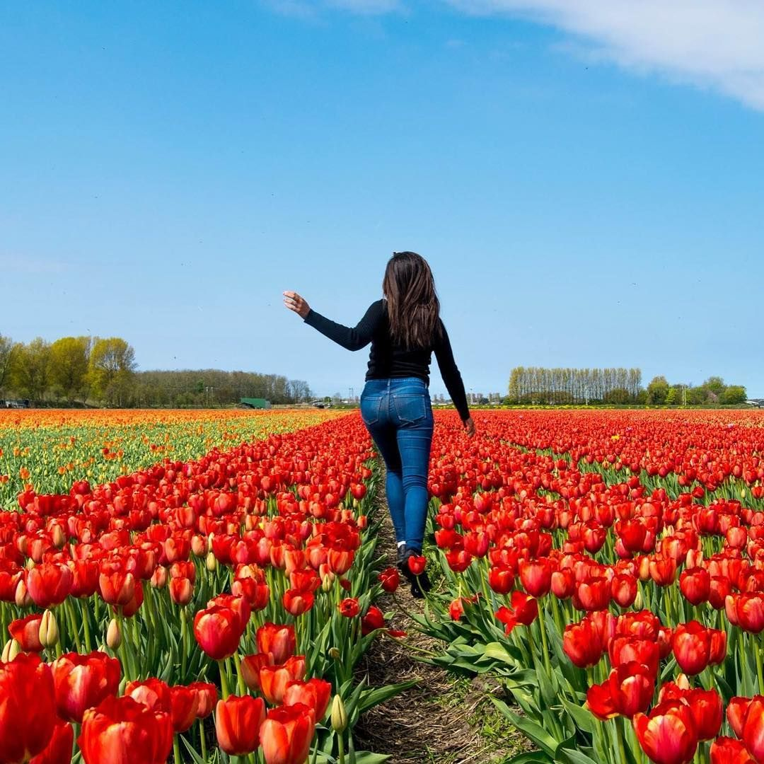 Tulip Amsterdam Keukenhof: How To See The Tulip Fields Near Amsterdam For Free By A