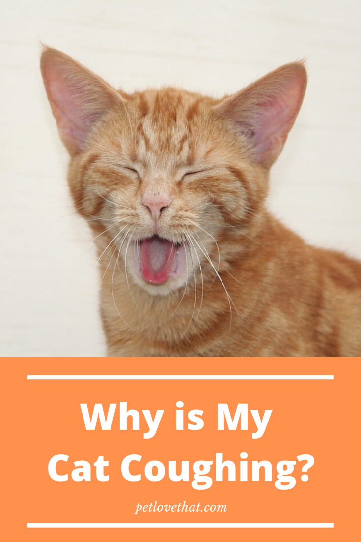 Is it normal for cats to cough? A cat coughing is such a