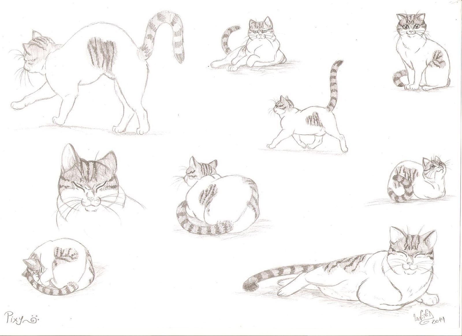 Pixy -cat anatomy and economy of lines studio by SkekLa on DeviantArt  #Anatomy #Cat #DeviantArt #economy #Lines