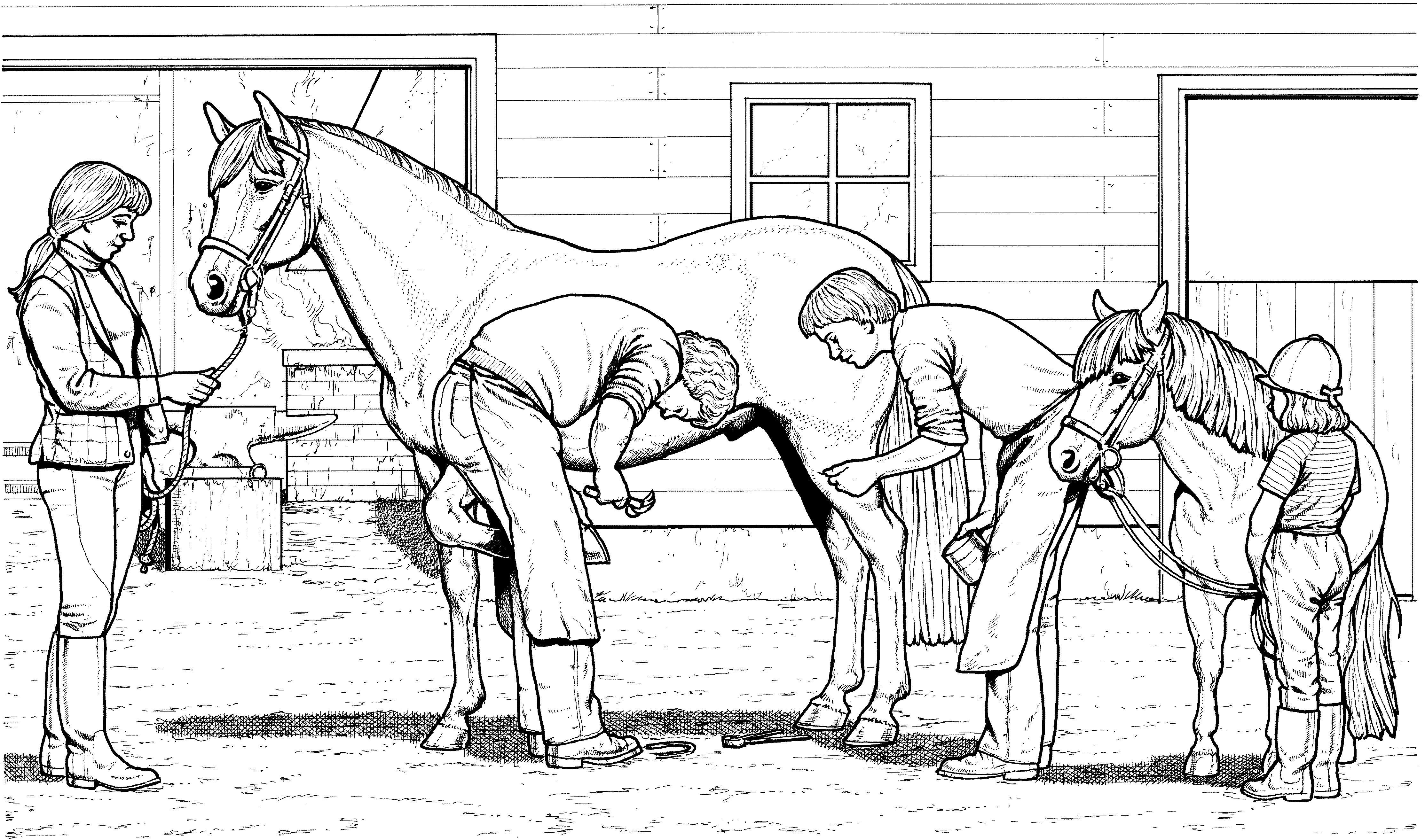 Animals coloring pages - Horses coloring pages | Horse ...