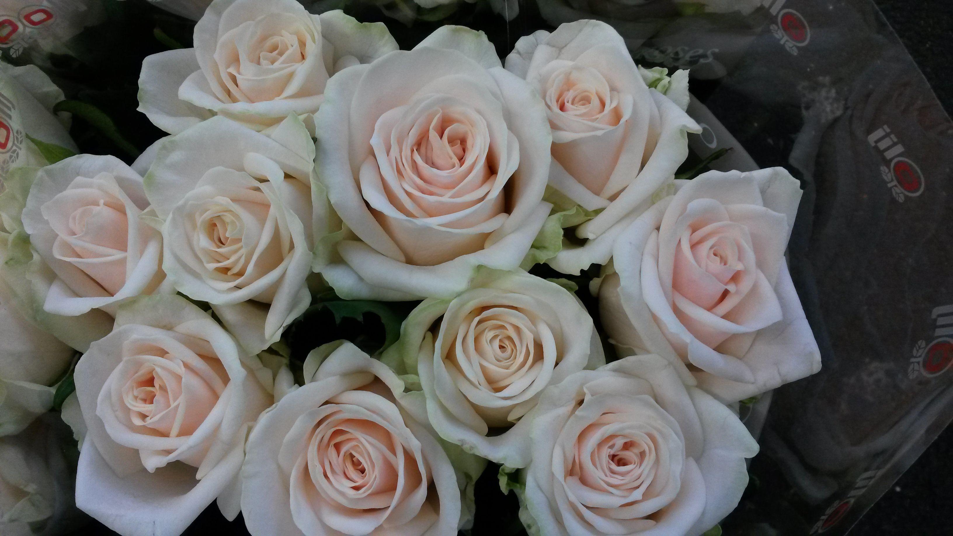 Rose Rosa Mylenna; Available at www.barendsenl.nl
