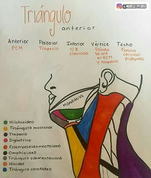 Pin de Sirley Vedia Hueso en ODT | Pinterest | Medicina, Anatomía y ...