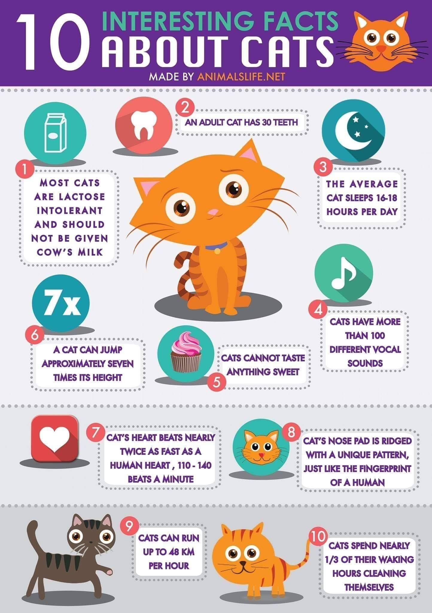 10 interesting facts about cats Cat facts, Fun facts