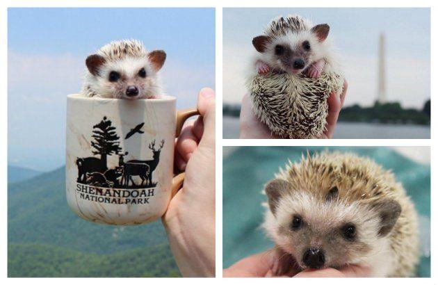 Estas son las 6 mascotas exóticas que seguro querrás tener - IMujer