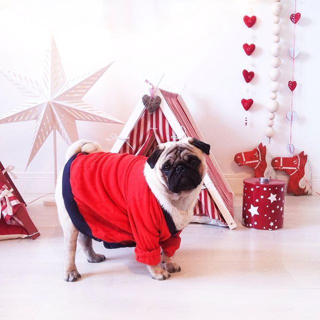 Christmas Teepees for the dogs