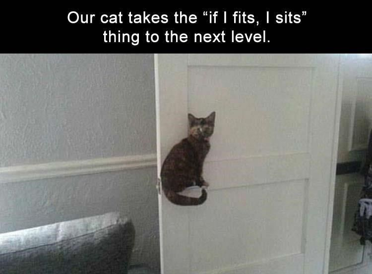Best Funny Cats 17 Cat Memes To Make You Laugh Until You Cry 17 Cat Memes To Make You Laugh Until You Cry 9