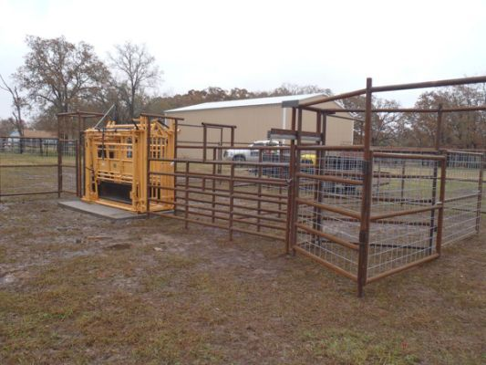 Simple Cattle Working Pens Related Cattle Corrals