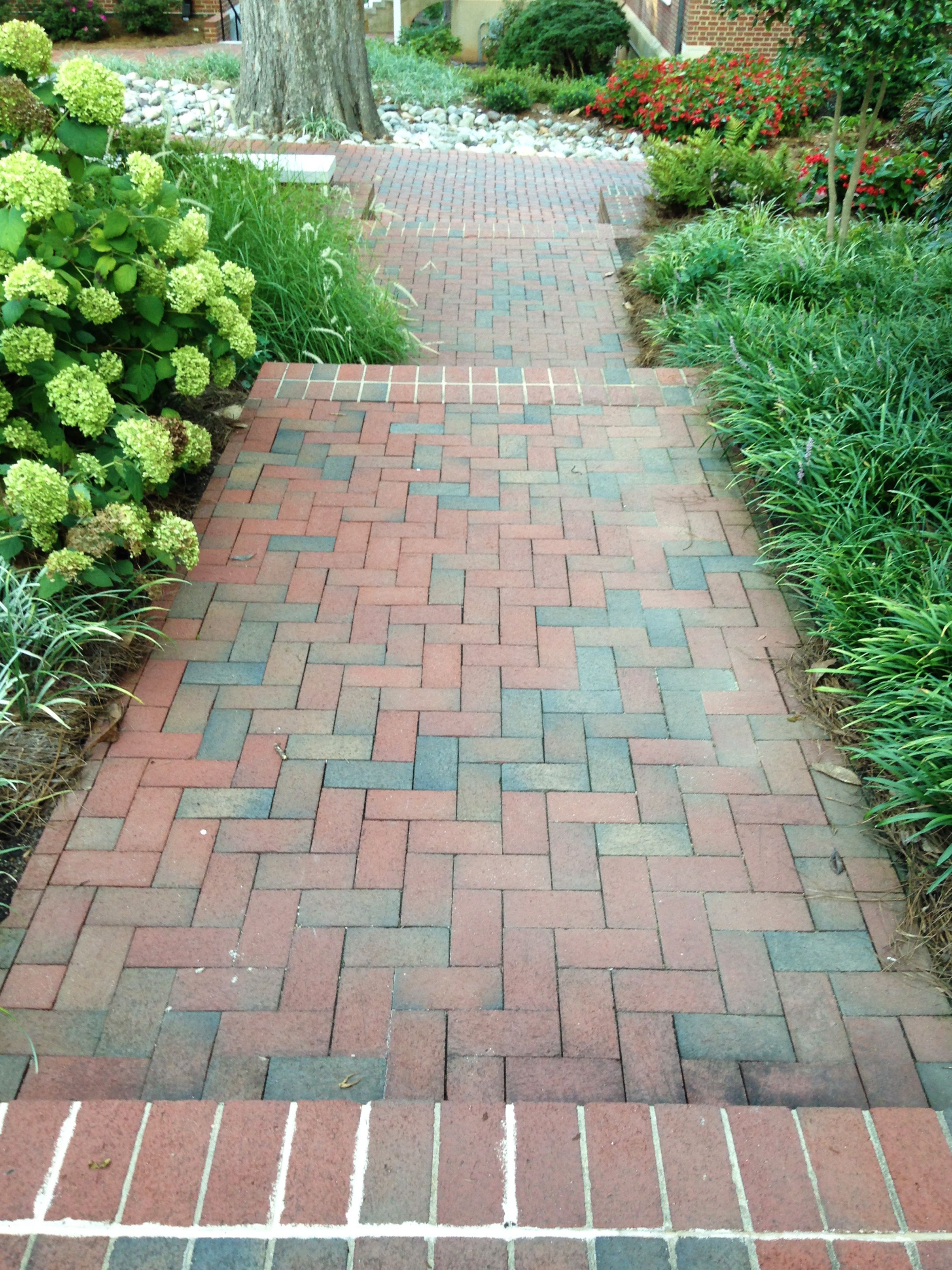 A Long Straight Garden Path, Landscaped With White Hydrangeas And Pathway  Full Range Pavers.