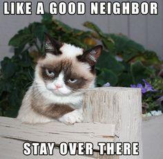 20fc77cde523e259c902d6f4e2238ce2 funny cat memes clean google search liv's loves pinterest