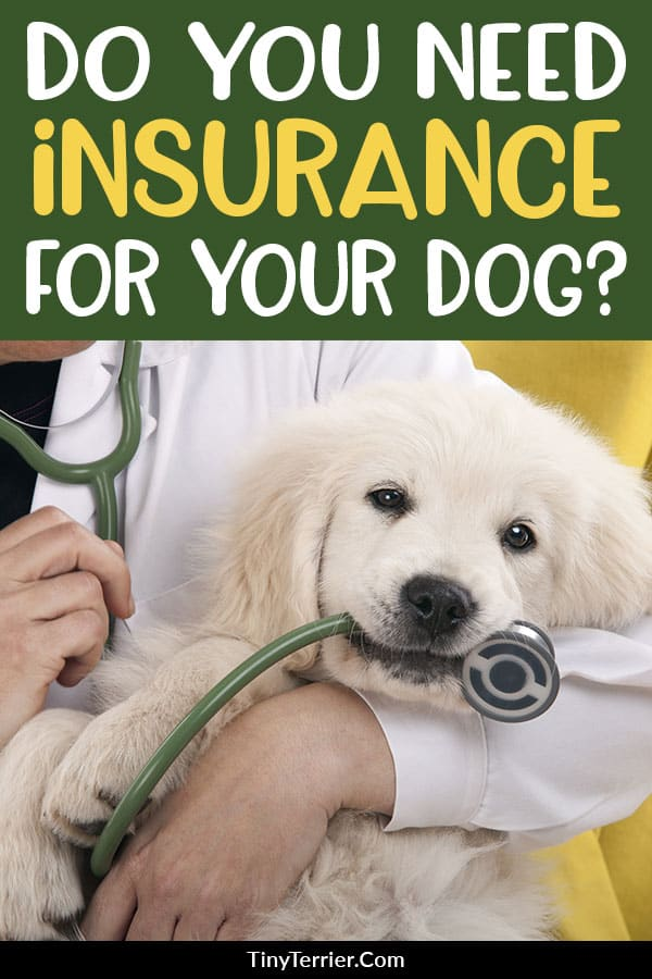 Should You Buy Pet Insurance For Your Dog In 2020 Pet Insurance