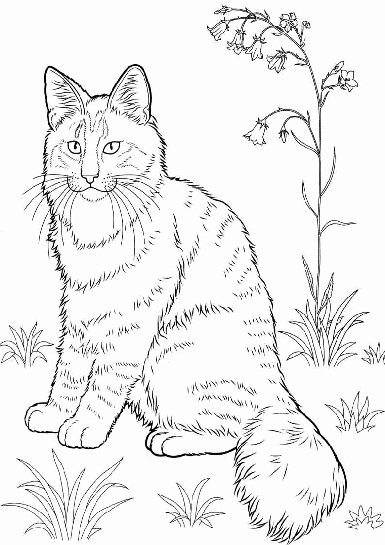Realistic Cat Coloring Pages For Kids Cat Coloring Book Cat Coloring Page Animal Coloring Pages