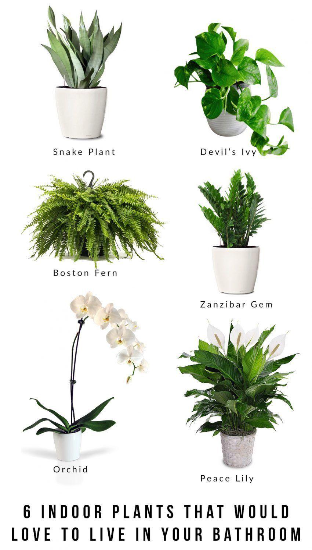 Photo of Unique Houseplants Indoor Tropical 6 indoor plants that would love to live in your bathroom