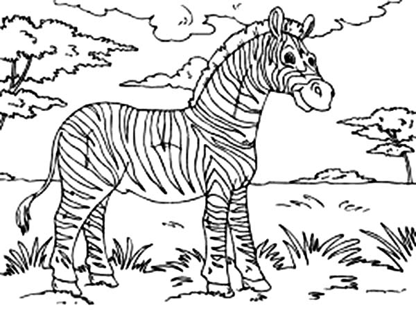 Zebra At The Meadow Coloring Page Download Print Online Coloring Pages For Free Color Nimbus