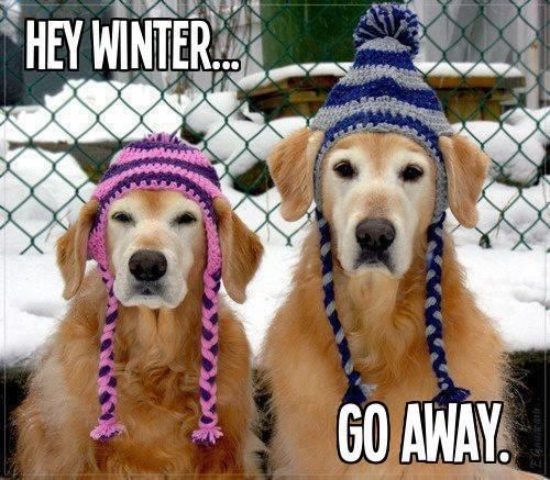 Hey Winter Go Away Funny Quotes Cute Quote Dogs Winter Snow Funny Quote Funny Quotes Winter Quotes Crochet Dog Hat Crochet Dog Dog Hat