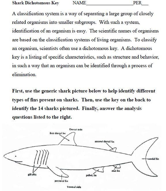 Free Worksheets Liry   Download and Print Worksheets   Free on as well Clifying Sharks using a Dichotomus Key furthermore Name That Fish Worksheet Answers   Free Printables Worksheet in addition Creating a Dichotomous Key additionally 27 Awesome dichotomous key worksheet sharks images   Middle as well Fish Anatomy Leaf Coloring Answer Key – donutrun co likewise Illinois Natural History Survey fishkey moreover Fish Dichotomous Key also Name that Fish Worksheet Answers Fabulous Clifying Animals likewise Dichotomous Key Worksheet Sharks Dichotomous Key Worksheet   Zoology further Fish Coloring   Matching Worksheet as well Oceanography Lab at DSC  Victoria Czupta  UR  There's plenty of fish further  additionally Minnesota Fish Taxonomic Key additionally dichotomous key worksheets for 5th grade together with . on fish dichotomous key worksheet answers