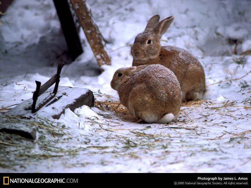 Snow bunnies...too cute!