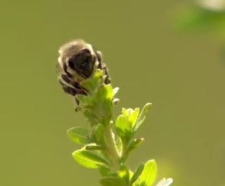 Sitio Mano´s:   Agricultores investem em planta nativa com propr...