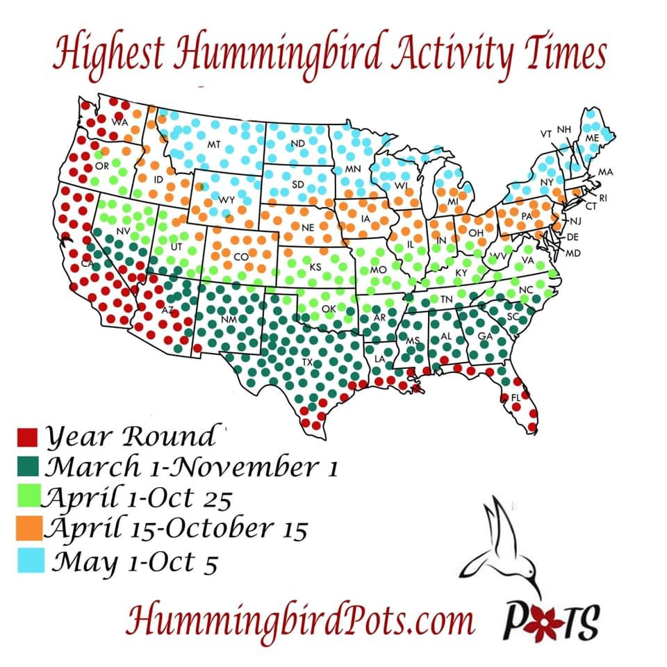 Pin by Peach Frenzy on infographics Hummingbird