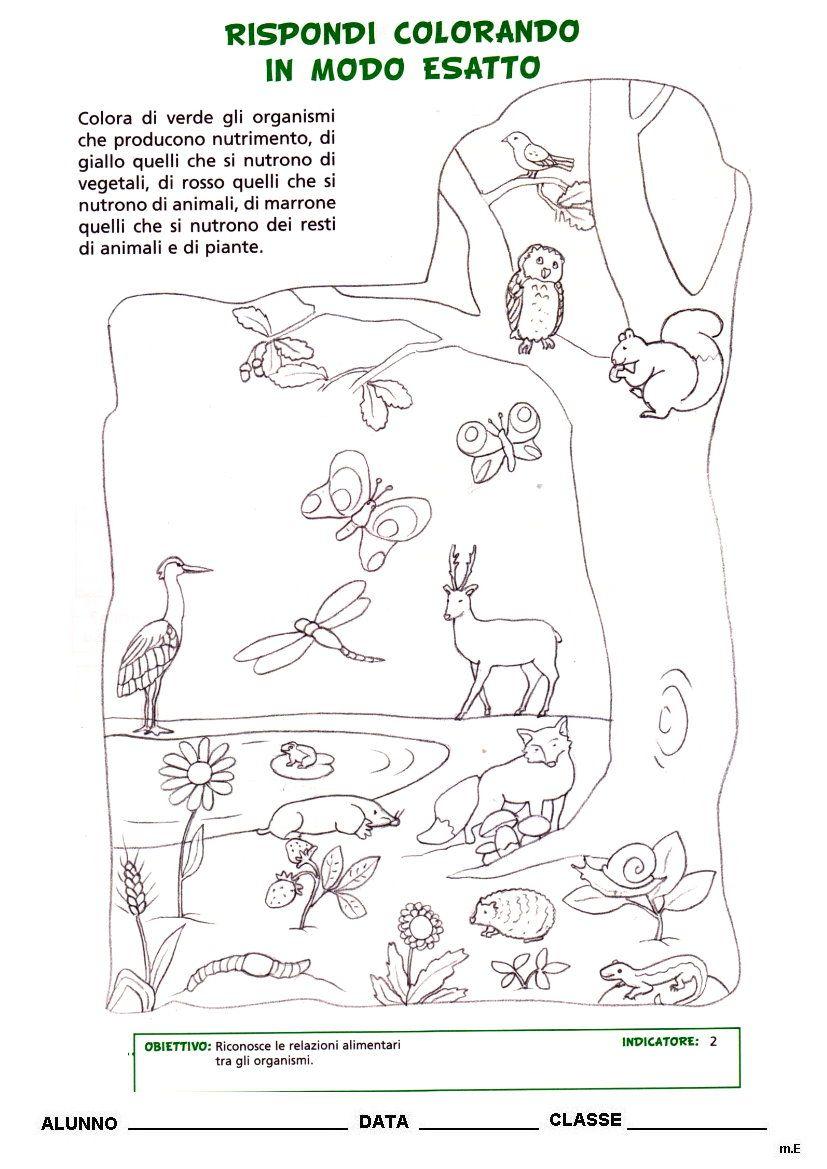 scienze cl3 - La maestra Enza didattica e disegni