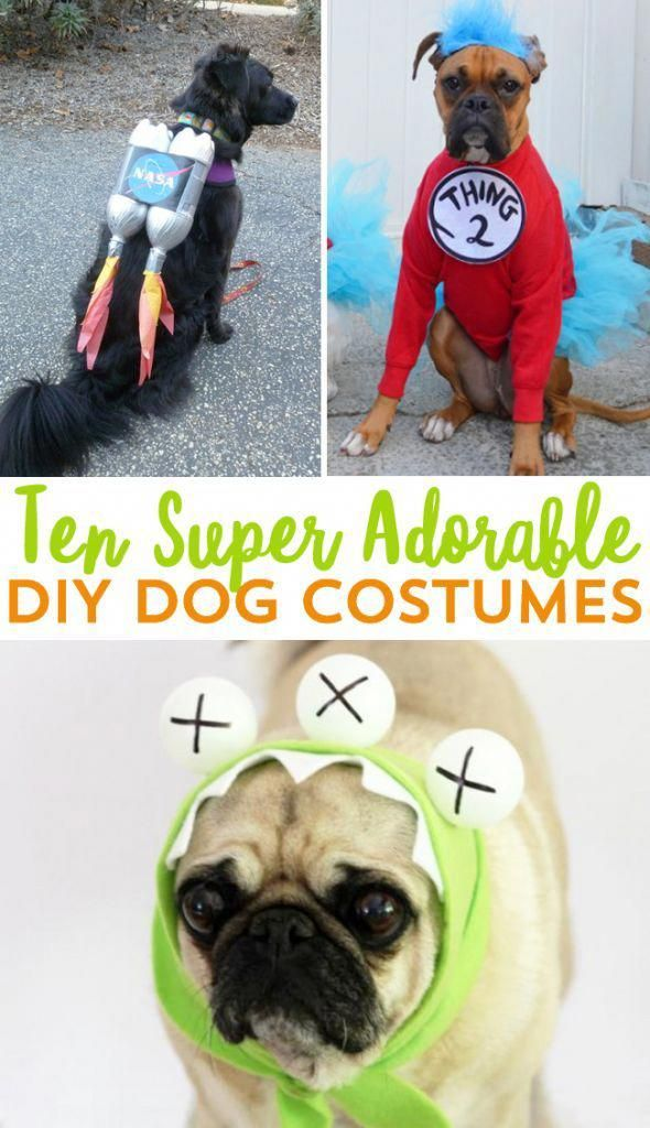 Dog Costumes Do Not Need To Be Expensive Diy Your Dog S Halloween