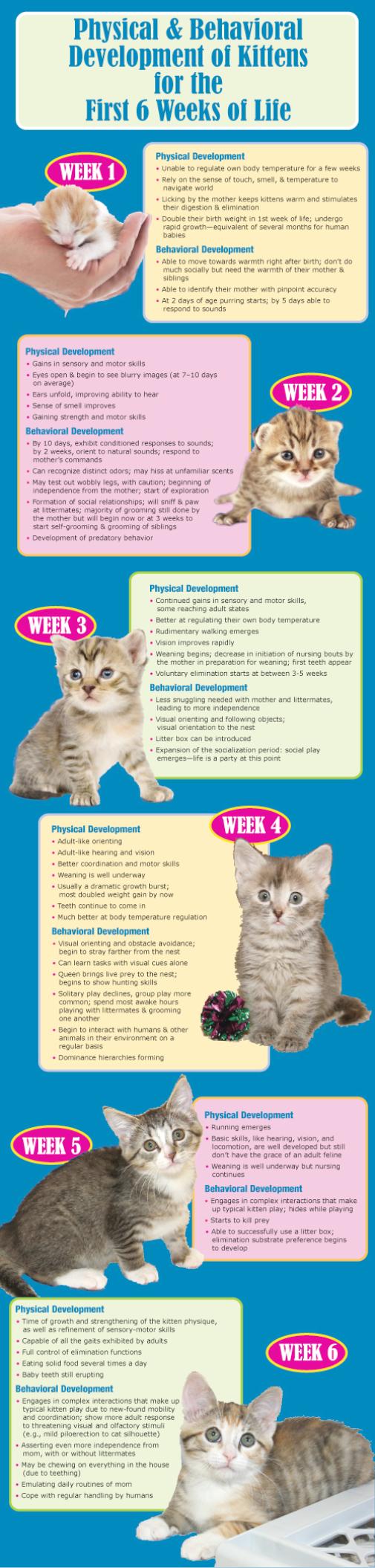 Ferocious Kitty Newborn Kittens Kitten Care Baby Cats