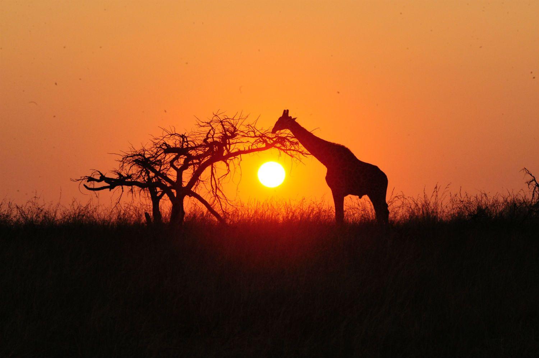 Découvrez Esiweni Luxury Safari Lodge en Afrique du Sud, une nouvelle adresse luxueuse tenue par un couple de Français tombés littéralement amoureux du KwaZulu-Natal...