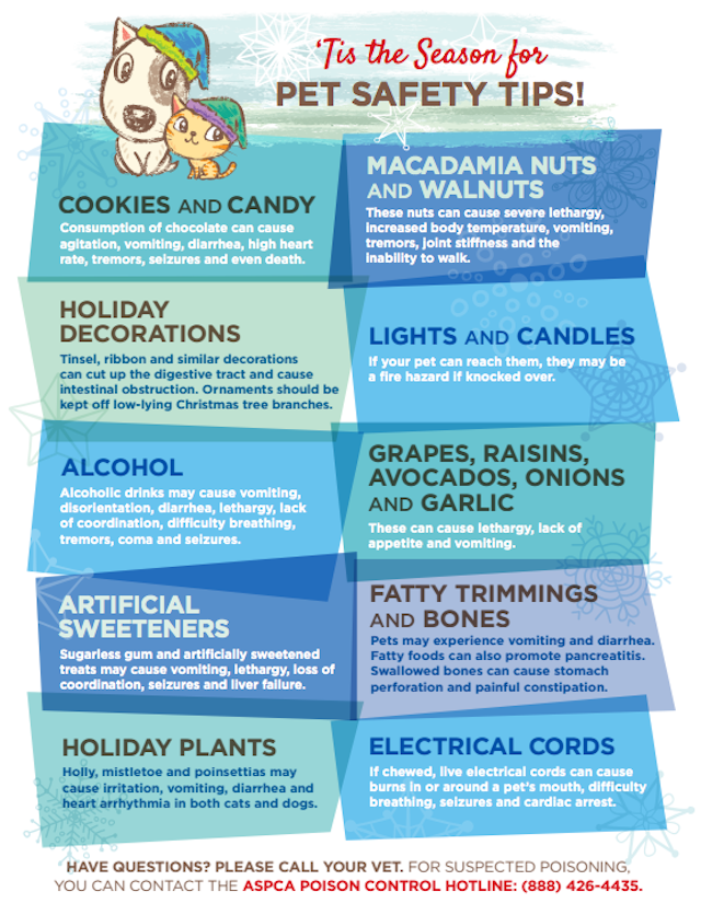 Holiday Safety Tips For Pets Pet holiday, Pet safety