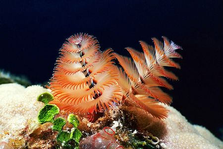 Beautiful Underwater Photography With Images Underwater Photography Ocean Creatures Underwater World