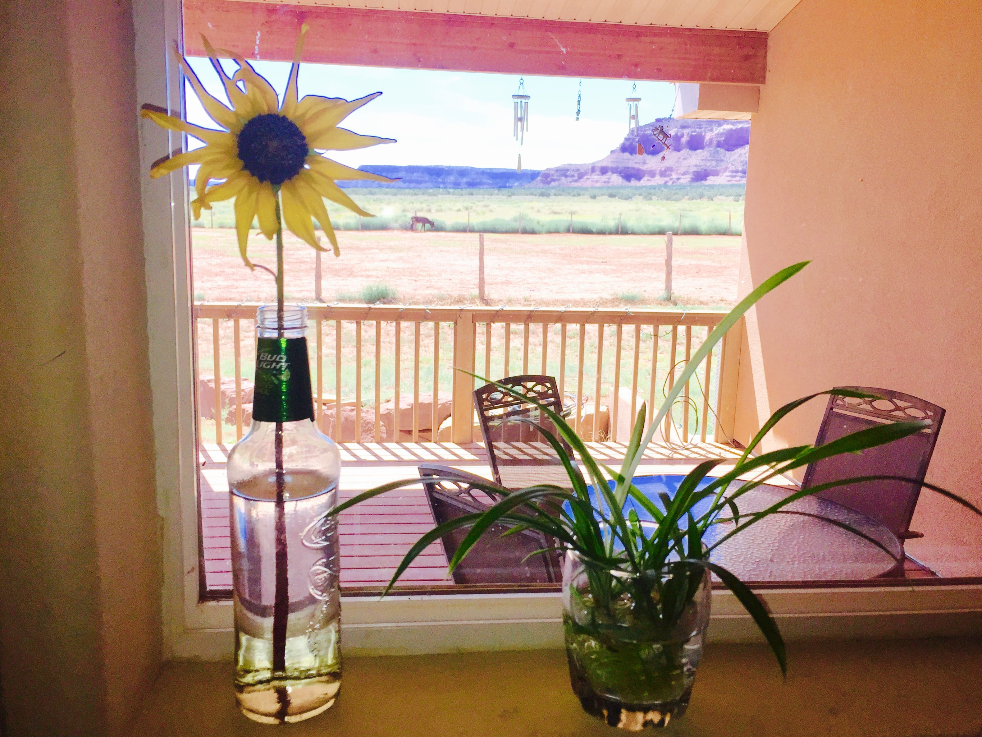 Looking out kitchen window  a yellow wildflower in a bottle vase we like to keep things
