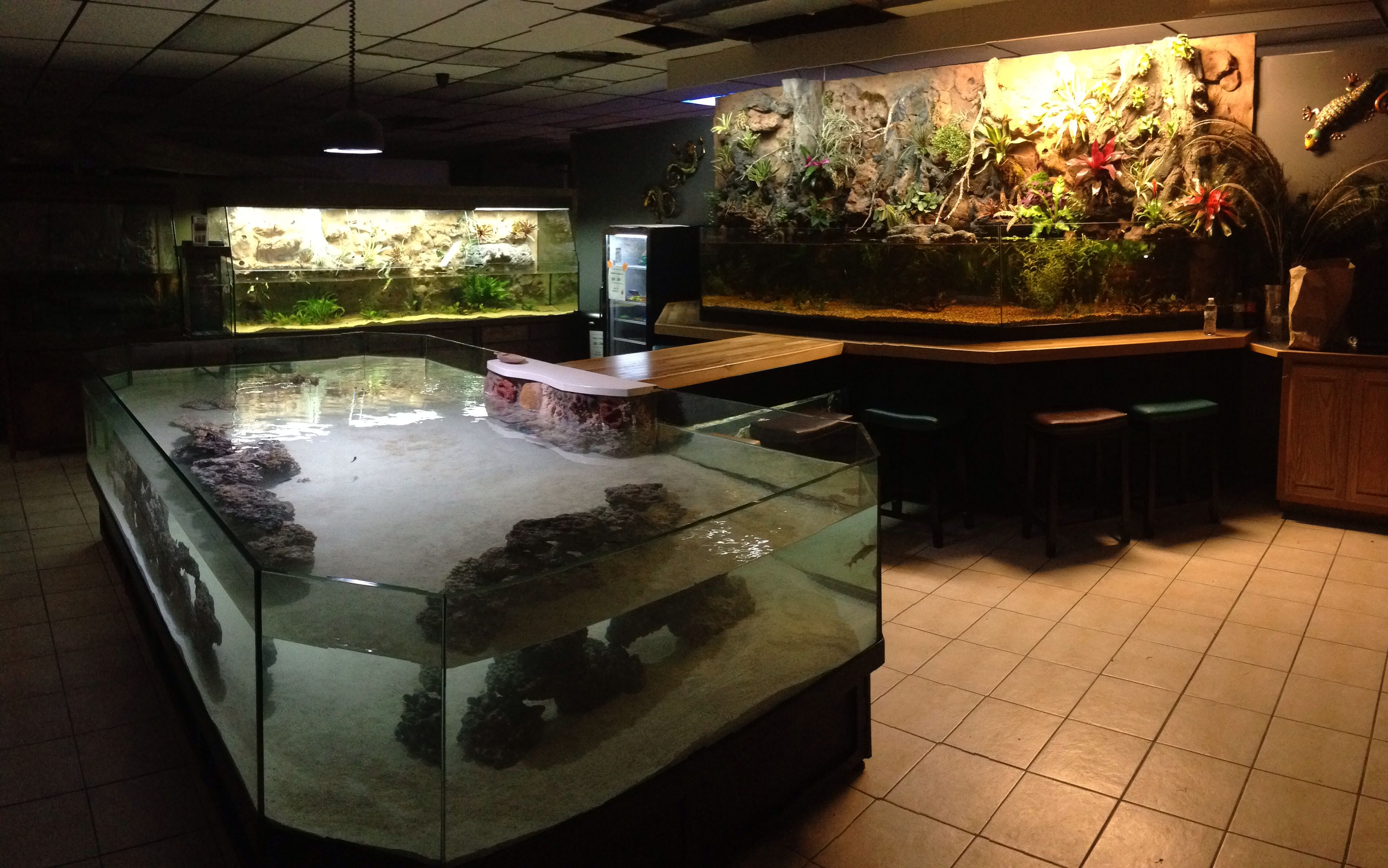 Stingray Amazon Tank with sitting Bar at Petorama Mansfield TX