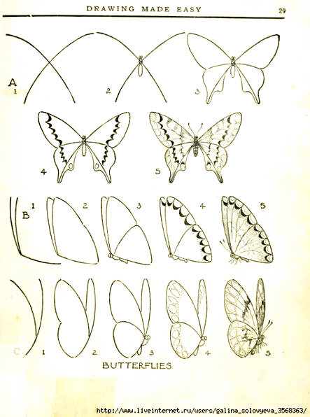 55 Ideas For Drawing Step By Step Butterfly Tutorials In 2020