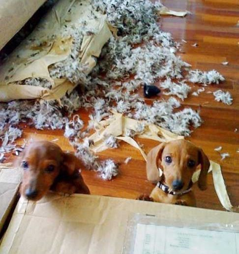 Have You Ever Come Home To Total Dog Destruction Like This