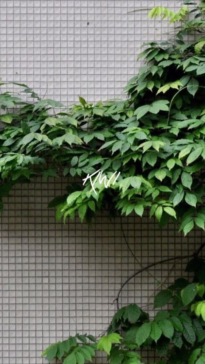 Discover Ideas About Plant Wallpaper Iphone Green