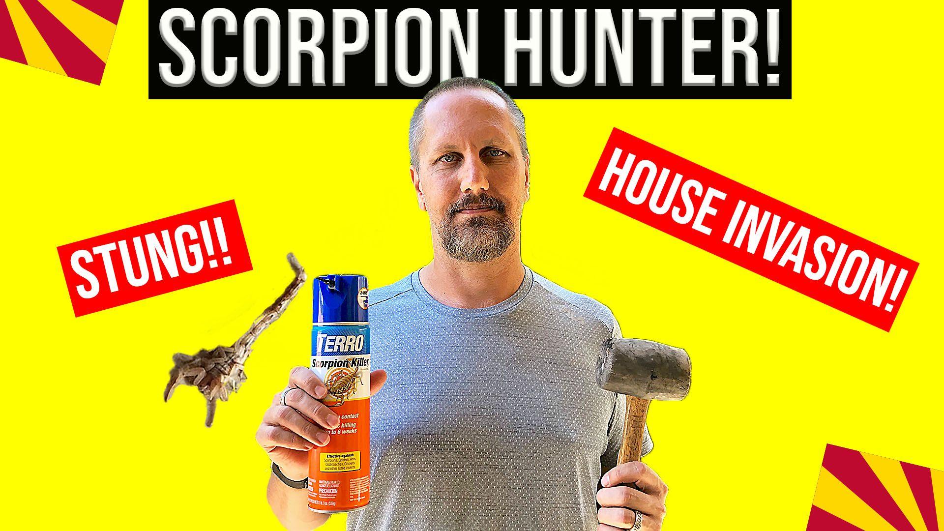 Bark scorpion sting getting rid of arizona scorpions