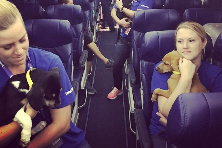 Rescued Dogs and Cats Just Filled a Plane to the U.S. from
