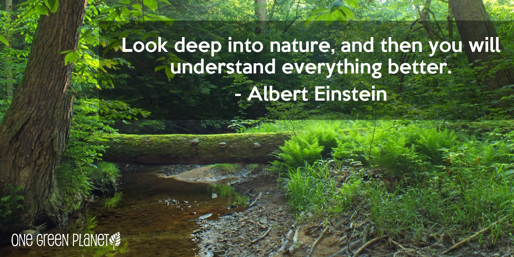 Protect Nature Quotes. QuotesGram Green quotes, Nature