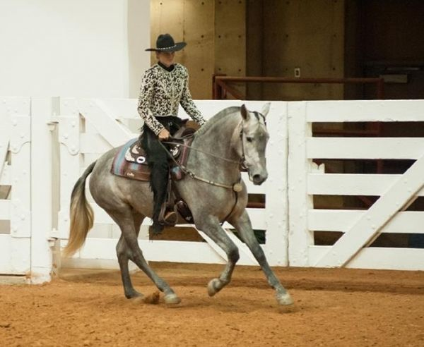 Clarisa lhr - Grey Andalusian Mare in Mcdade, Texas 78650